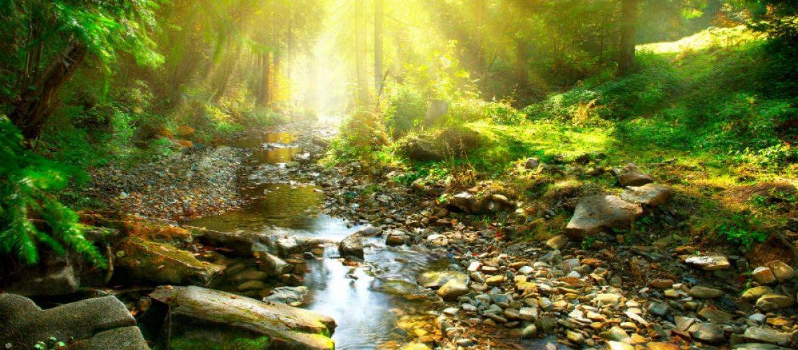 A föld és a víz világnapja-A zöld és a kék összes árnyalata